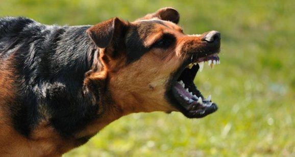 Blog 4: Blaffende honden